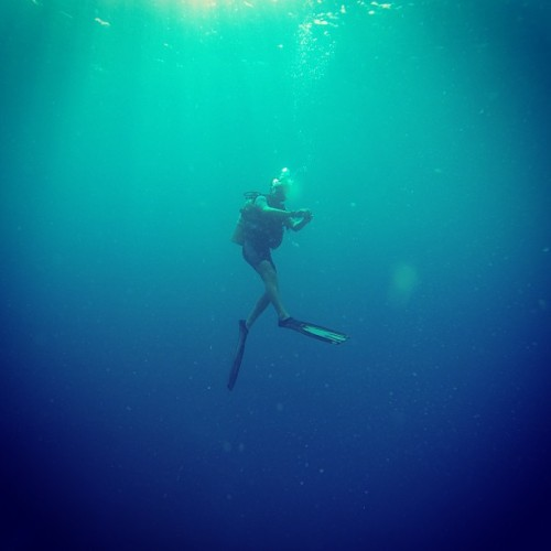 Diving in the Maldives (via fvonf on Instagram)