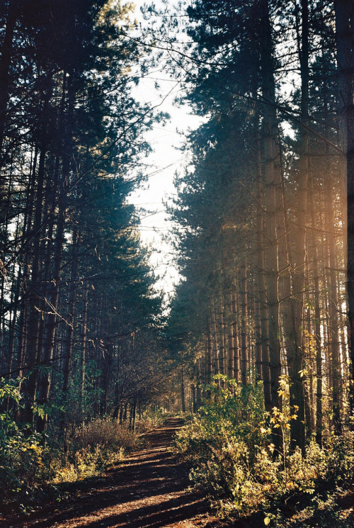 hellanne:  tree line (by liamb1994)