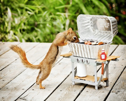 laughingsquid:  Photo Series Shows Squirrels in Scenes of Everyday Life