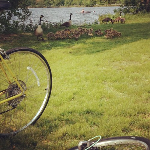 Goose sighting #artistic  (at the charles. )
