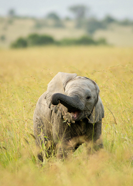 15 Baby Elephants We Would Like To Be Friends With by Buzzfeed  Thanks, Matt!