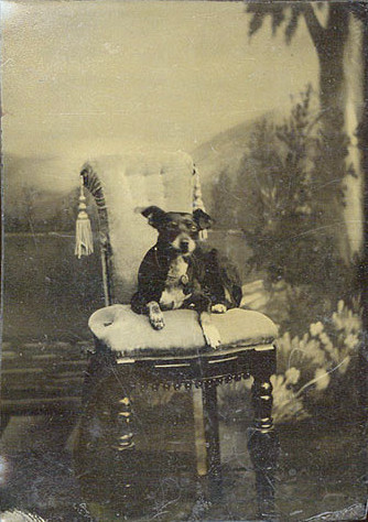 ca. 1860-70's, [tintype portrait of pampered-looking dog, wearing a collar with a tiny padlock attached to it, seated in fancy studio chair before an elaborately painted backdrop]    via Christopher Wahren Fine Photographs, Skylight Gallery