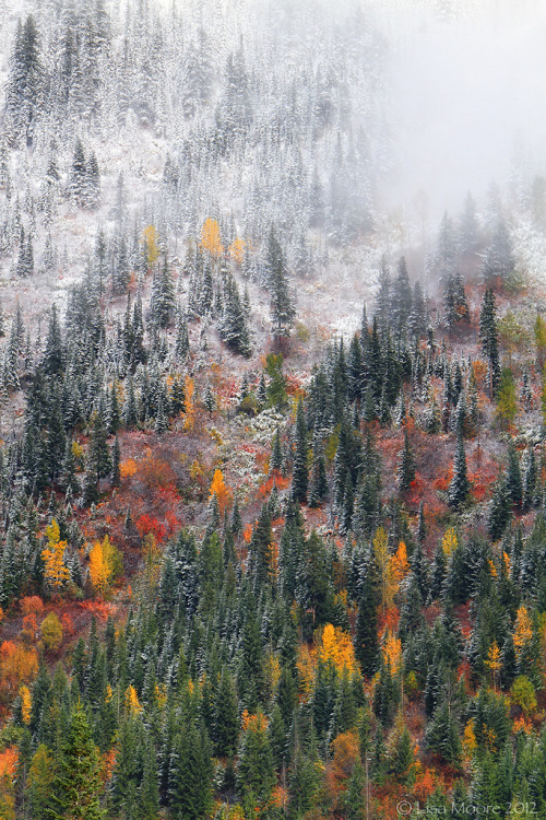 woodendreams:   (by Blue Hour)
