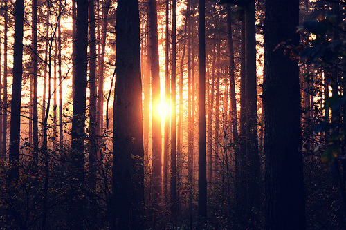 "awesomemazing-teeesh:  JUST WHEN THE SUN STARTING TO SAY ""GOOD MORNING GORGEOUS!"" :)  beautiful"