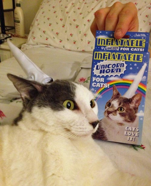 tastefullyoffensive:  Cats love it.[via]