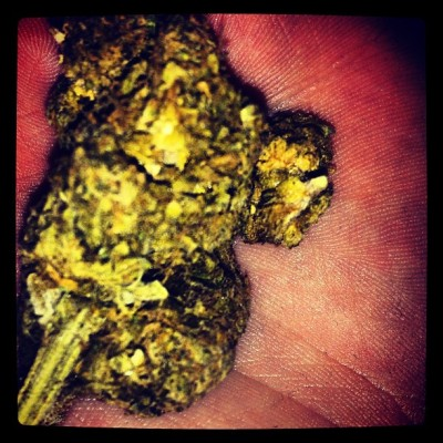 Fruit. #marywanna #marry #jane #maryjane #weed