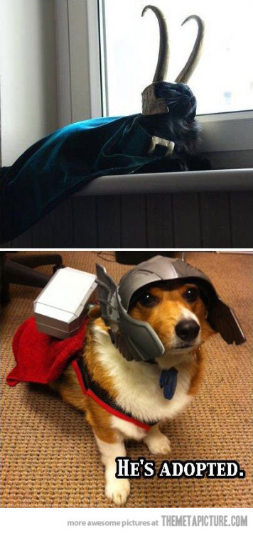 lol-coaster:  funny Loki cat Thor doghttp://lol-coaster.tumblr.com