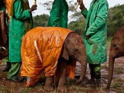 Baby elephant in raincoat wishes it was a nice day out today. Aww.