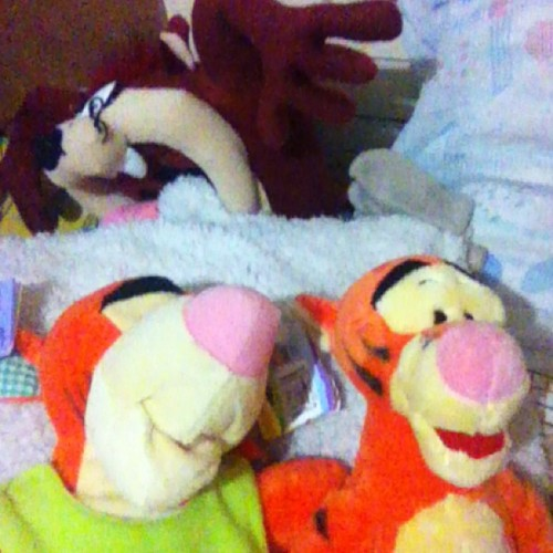 My bedmates.. They mean a lot to me, also the people who gave them to me.. 🎁😘
