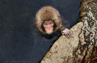 Little Guy. Photo by Marsel Van Oosten