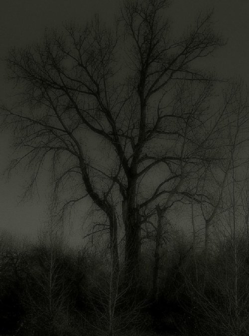 Tree of doom… by *wolfcreek50