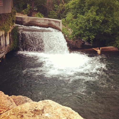 Diving in. #sanmarcos #texas #tx #river #waterfall #swimming #myjourney