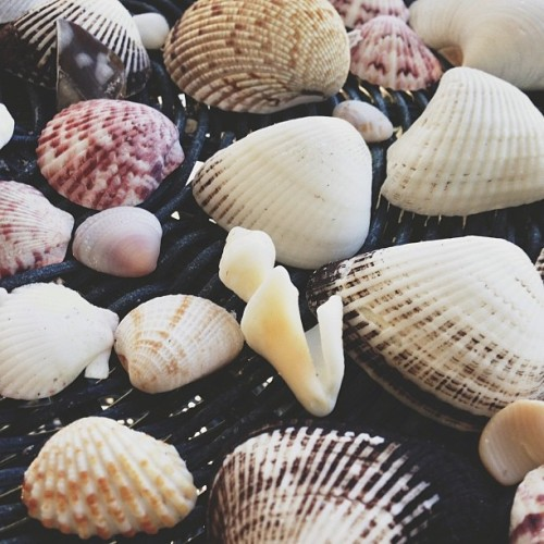 The spoils. #seashells #florida #sanibel (at Sanibel Island)