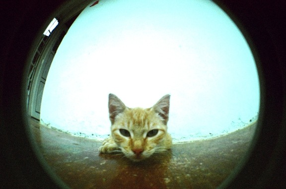 lomographicsociety:  Lomography Camera of the Day - Lomography Fisheye One Get it online!