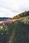 Expressions of nature norway by camilla @21vines