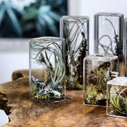 Air-plant terrariums #terrariums #plants