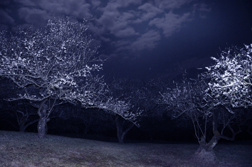 faeryhearts:  In the moonlight,The white plum-tree becomes againA tree of Winter.— Buson.