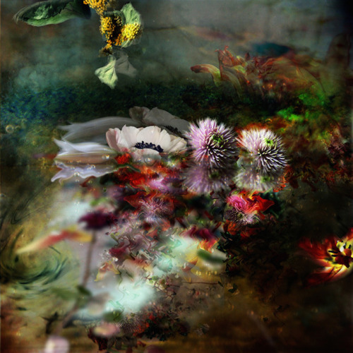 asylum-art:  Splendid Portraits of Flowers by Isabelle Menin   on Behance