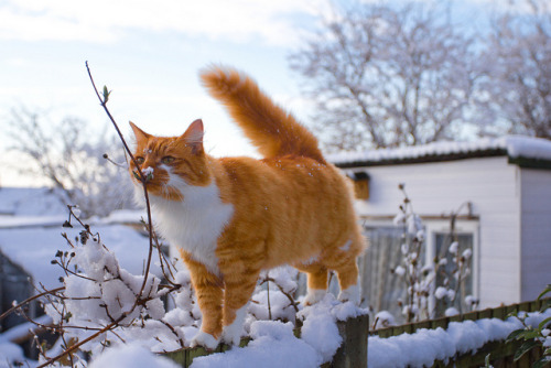 photogenicfelines:  (StuMcP)