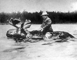 This picture? Oh, nothing much. Just Theodore Roosevelt riding a swimming moose.