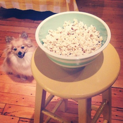 Molly loves popcorn. (at the Shire)