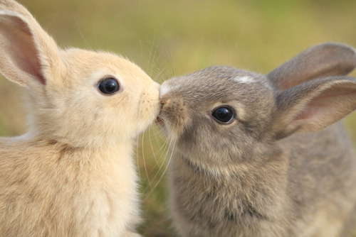 tbh-awkward:  petalsyrup:  i will always reblog bunnies smooching. you can get out if you don't like it.  bunnies have a better love life than me ya