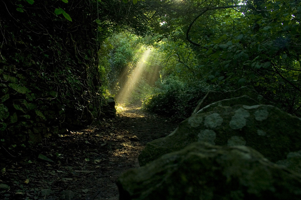 thedruidsteaparty:  Suns rays stock 2 by *AngiWallace