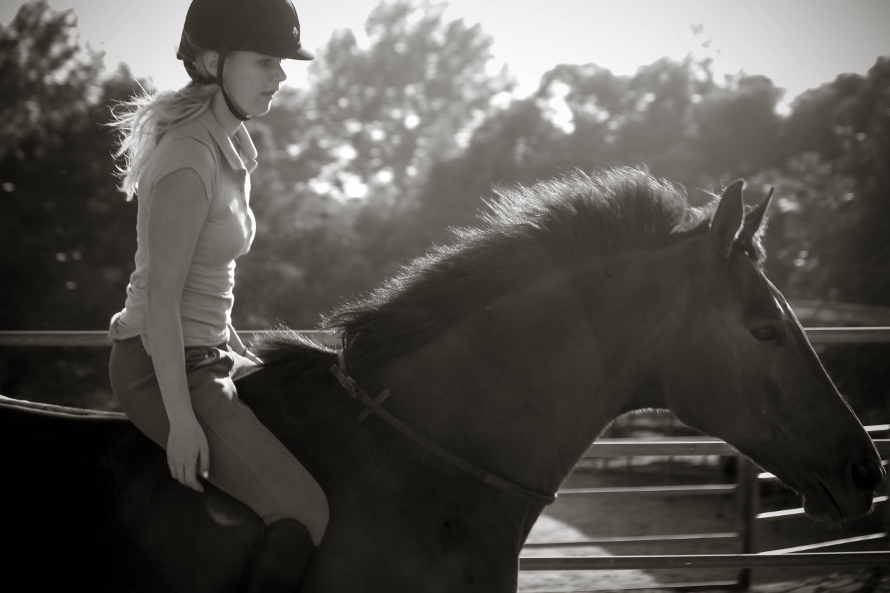 lifelongequestrian:  ~freedom~