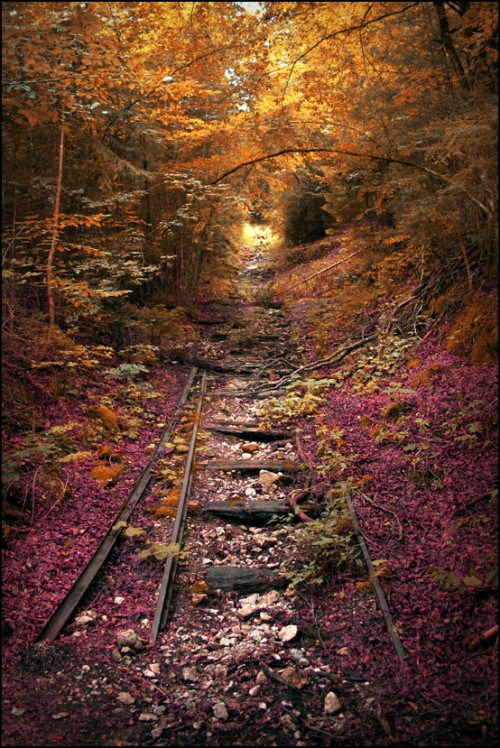 abandonedporn:  Abandoned Railroad in Lebanon, Missouri