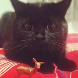 惊呆了!😱#cat #blackcat #cute #love