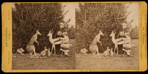 The George Eastman house now has a Tumblr! eastmanhouse:  Eadweard J. Muybridge (1830-1904), Deer and Kangaroo at Woodward's Gardens, ca. 1870, stereograph-albumen print, George Eastman House Collection.