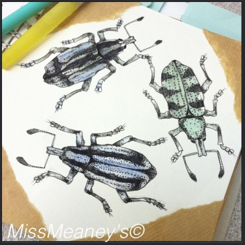 More beetles, mixed media if watercolours and fine-liner .