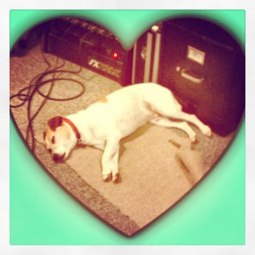 #studio #dogs are the #best!  #adorable #naptime #amps #music
