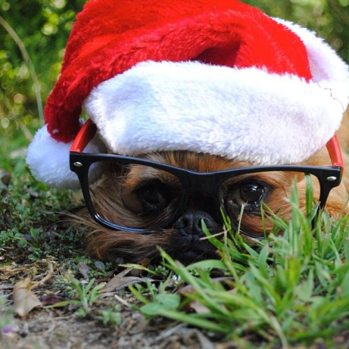 "New Zealander Brussels Instagram Superstar Digby Van Winkle Santa style. ""Christmas is giving me such an exhausted feeling… All those gifts to unwrap."" - @digbyvanwinkle- #webstagram"