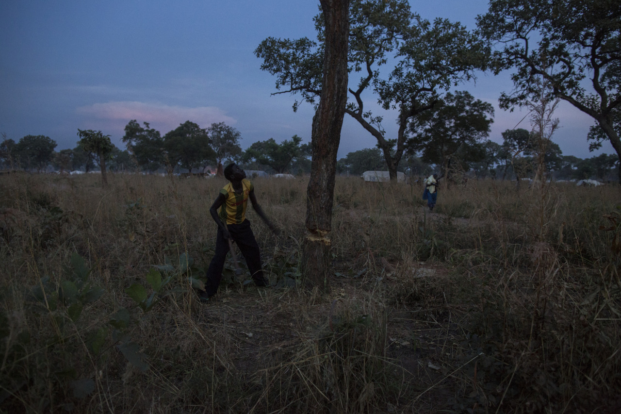 intamunu:  A young refugee is cutting a tree as sun sets. To build houses and fences and make charcoal to cook, the refugee from South Kordofan, Suda in Yida Refugee camp have to cut trees around and outside the camp, erasing wildlife and huge forests to survive. Over 70 000 civilians have fled South Kordofan, Sudan as the Sudanese government have been dropping bombs on Sudanese civilians for over one year and a half around the region hitting civilians and military areas. NGOs and journalists are forbidden from entering the region.© Camille Lepage - All rights reserved 2012