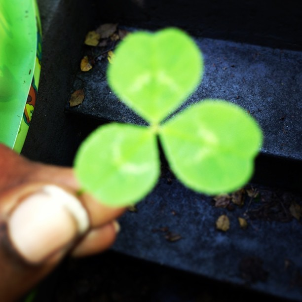 Clovers….. shout out to my Irish friends