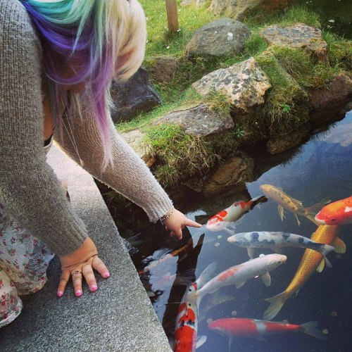 I wish I could spend everyday in the Japanese tea gardens, playing with koi fish.