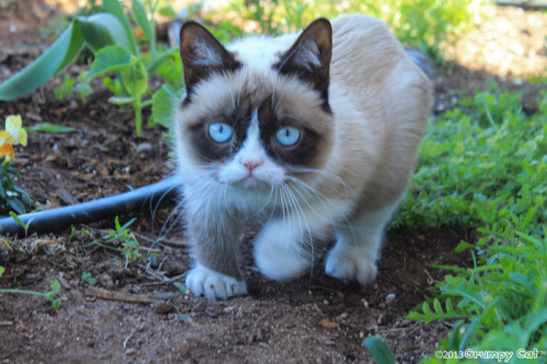 realgrumpycat:  The Daily Grump | April 9, 2013