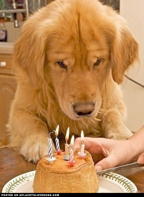 aplacetolovedogs:  Birthday dog waiting so patiently for cake! 'He might be only part of your life, but for him, you are his everything, the only person in his whole life.' For more cute dogs and puppies
