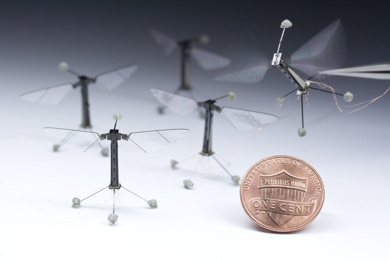 nationalpostphotos:  Tiny winged robots — This photograph provided May 6, 2013 courtesy of Harvard University  shows miniature winged robots inspired by flies that could one day help pollinate crops or aid the search for survivors at collapse sites — once they get off the leash, that is.  The prototypes by researchers at Harvard University weigh 80 milligrams and have managed short controlled flights by flapping their mechanical wings while still tethered to a tiny power cable, the journal Science said this week.   The coin-sized robots sport two thin wings that flap 120 times per second.   Flight tests have shown they can make basic maneuvers, including hovering in place for about 20 seconds before crashing.    (AFP PHOTO/Courtesy of  Harvard University/Kevin Ma and Pakpong Chirarattananon/Getty Images)