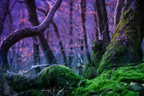 Magic Tree [357/366] (Explored) by Hörspielhörerin [ busy ] on Flickr.