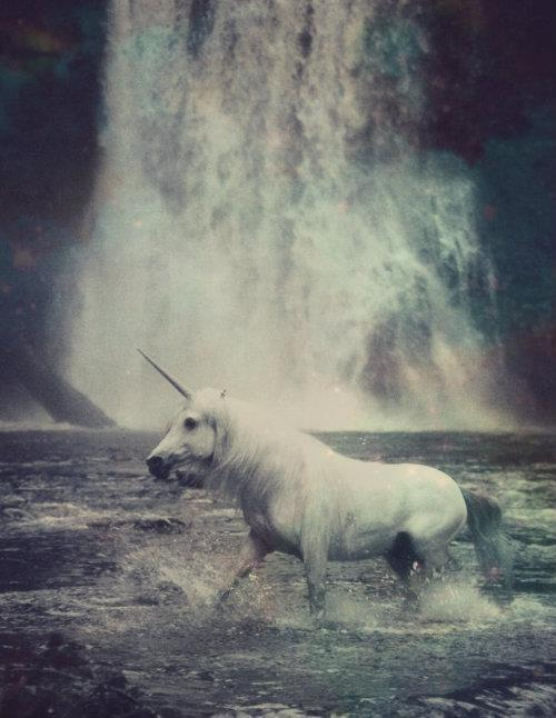 duszeeek:  UNICORN | via Tumblr na We Heart It http://weheartit.com/entry/61649622/via/pursuitofhappiness333