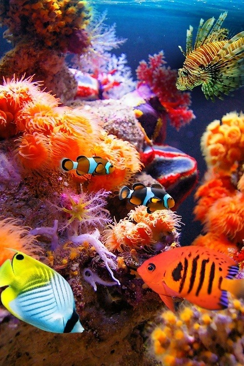 x-enial:  Tropical Fish