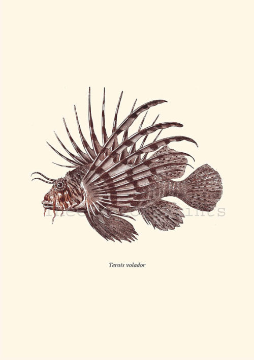 lionfish are the coolest fish