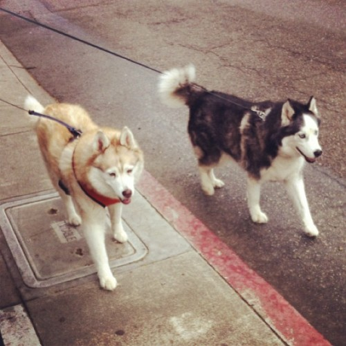 Saw these two on the way to work. Beautiful. 🐾🐾❤❤❤
