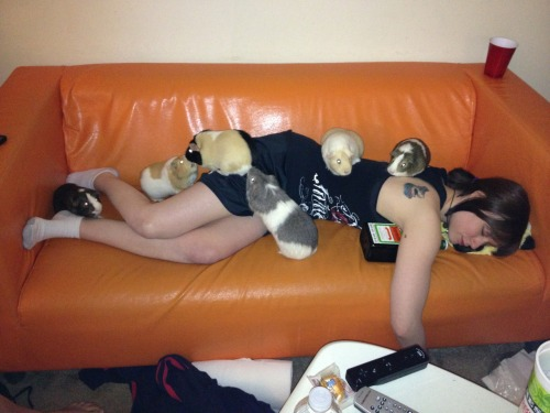 moniquill:  tashucashew:  Party hard.  [Image: A pack of guinea pigs has made an expert kill. They will feast well tonight.]
