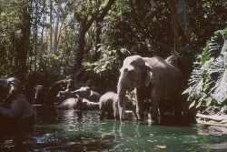 photography animals beautiful hippie hipster landscape trees boho Grunge elephant water nature forest wildlife bohemian Woods tropical Wilderness