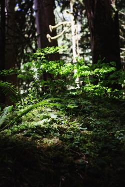 tjgphotos:  Light on the forest floor. Boulder River Waterfall trail.