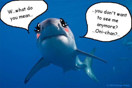 Kawaii sharks
