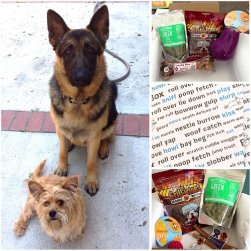 Barkboxes came today! New toys and treats for my babies 🐶🐺 #troiboy